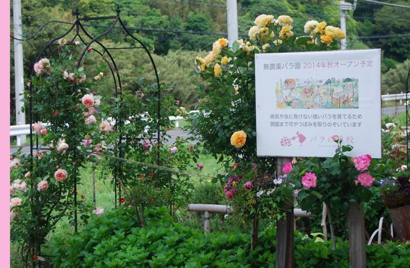 お茶とエイジングケアに役立つ商品を扱う【株式会社バラの学校】 | 無農薬バラ園